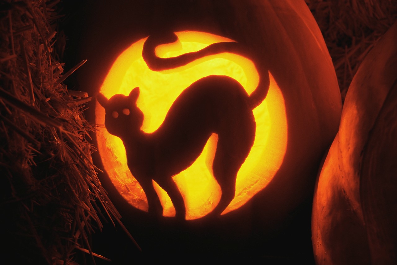 cat-halloween-pumpkin-carving-idea